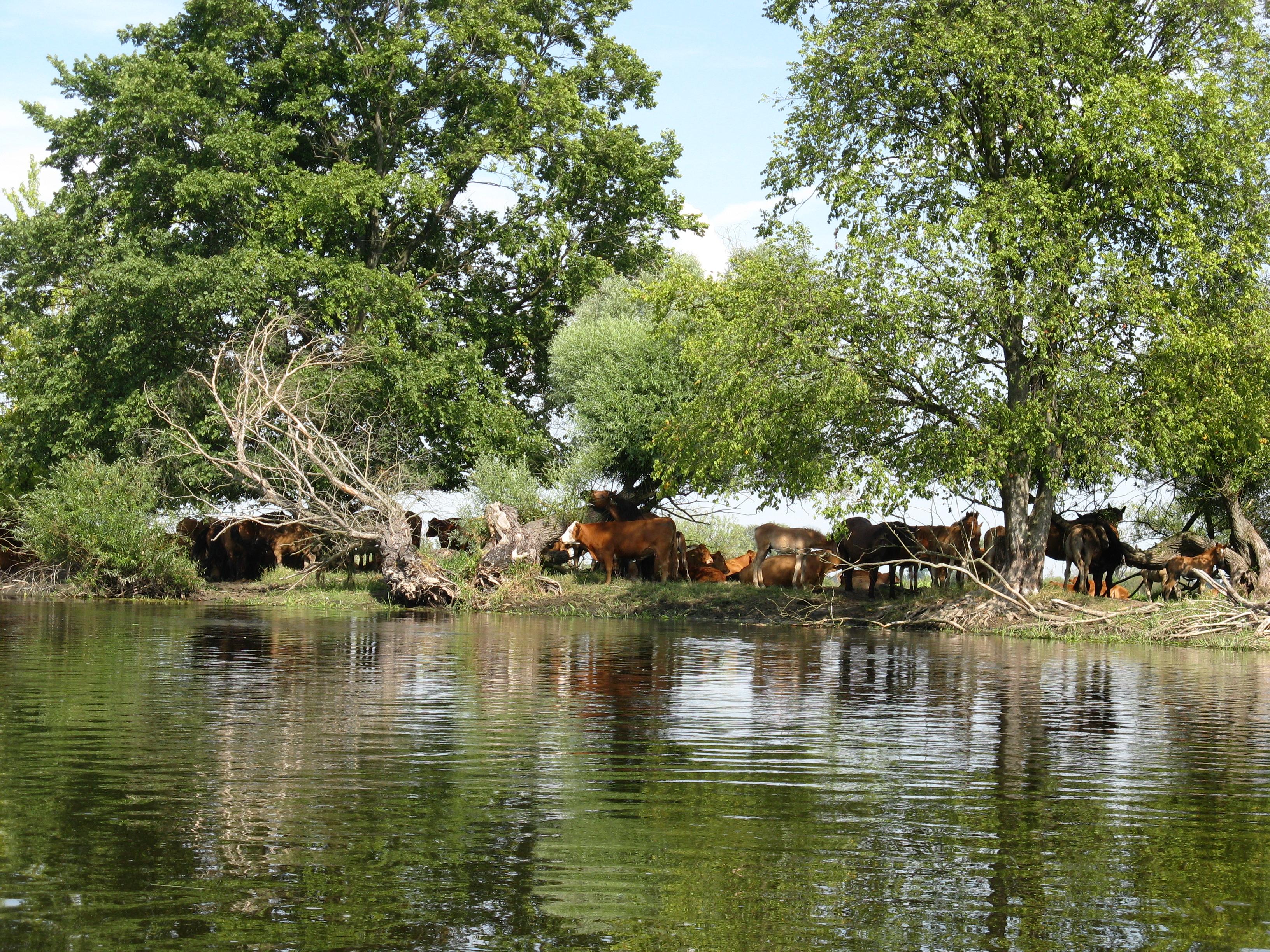Rzeka Warta, nieuregulowany fragment/Fot.: Dominik Dobrowolski