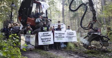 Aktywiści Greenpeace złożyli zawiadomienie o podejrzeniu popełnienia przestępstwa