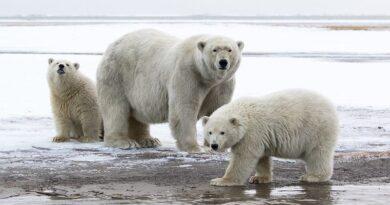 Deutsche Bank wycofuje się z finansowania odwiertów w Arktyce