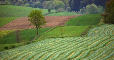 Czy państwo uratuje małe gospodarstwa? Dzięki nim mamy żywność bez szkody dla środowiska