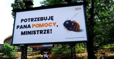 Minister rolnictwa zezwolił na użycie zabójczych dla pszczół pestycydów