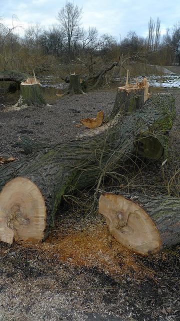 Wycięte drzewa w Parku Lotników Polskich w Krakowie Fot.marcin wojcik/Flickr/Creative Commons