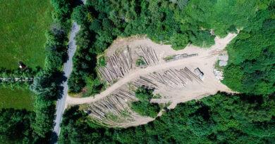 Model zarządzania lasami wymaga gruntownej zmiany