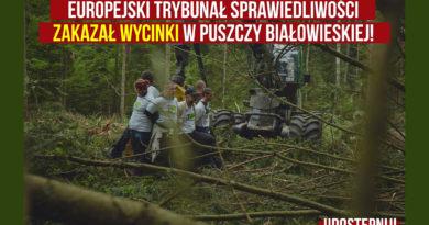 Trybunał Sprawiedliwości UE zakazał wycinki w Puszczy Białowieskiej