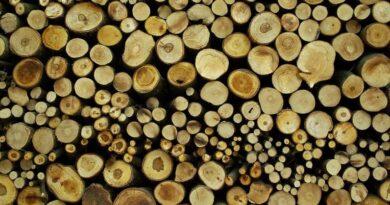 """Inwestycje gazowe wykluczone z listy """"zrównoważonych"""", ale Unia zgadza się na palenie lasami w elektrowniach"""