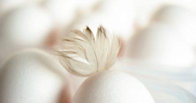 Jak firmy wycofują jaja z hodowli klatkowej