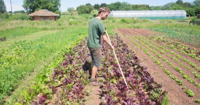 Tutaj i gotowi: znaczenie chłopskiego rolnictwa w kontekście COVID-19