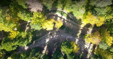 Znika las w mateczniku orła przedniego