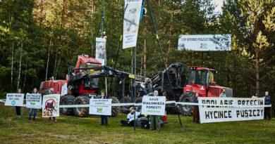 Trwa trzecia blokada wycinki w Puszczy Białowieskiej