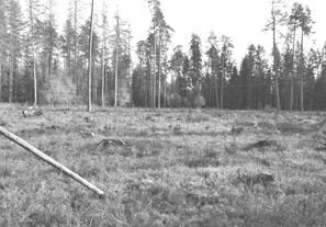 Sadzone są młode drzewka, obszar uprawy otaczany jest płotem z siatki. Fot. A. Bohdan