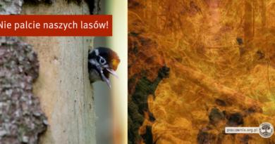 Rządowy projekt zmieniający definicję drewna energetycznego wybitnie szkodliwy – stanowisko przedstawicieli nauki przesłane do Senatu i Ministerstwa Środowiska