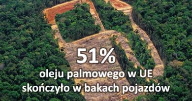Kierowcy muszą spalić więcej lasów deszczowych, aby spełnić cele UE dla OZE